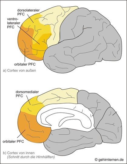 Präfrontalcortex, PFC, Präfrontalkortex
